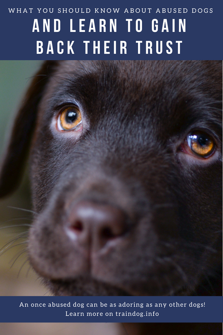 What You Should Know About Abused Dogs And How To Get An Abused Dog To Trust You Check Out This Article By Clicking On The Im Dog Training Dogs Trust Your