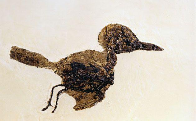 Fossil Darmstadt