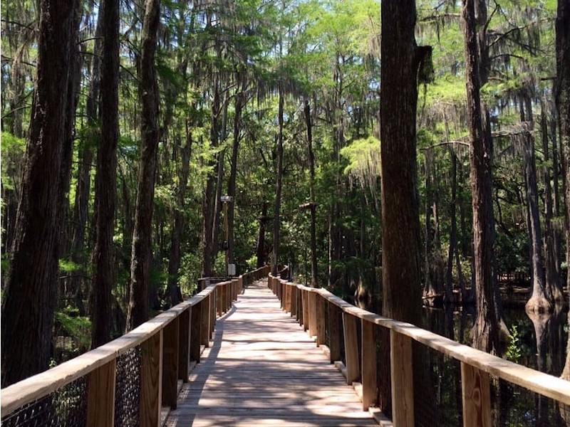 11 Best Things To Do In The Florida Panhandle Tripstodiscover Florida Travel Panhandle Florida Florida Vacation Spots