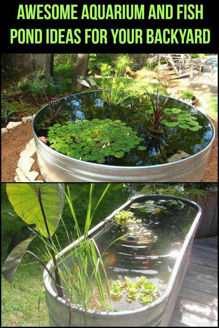 Which of these aquariums and ponds would you like to have in your