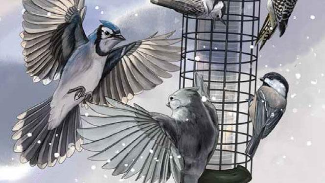 When 136 Bird Species Show Up at a Feeder, Which One Wins?, #Bird #feeder #show #species #Wins #winteranimalsactivities #winteranimalsillustration #winteranimalsphotography #winteranimalssongs