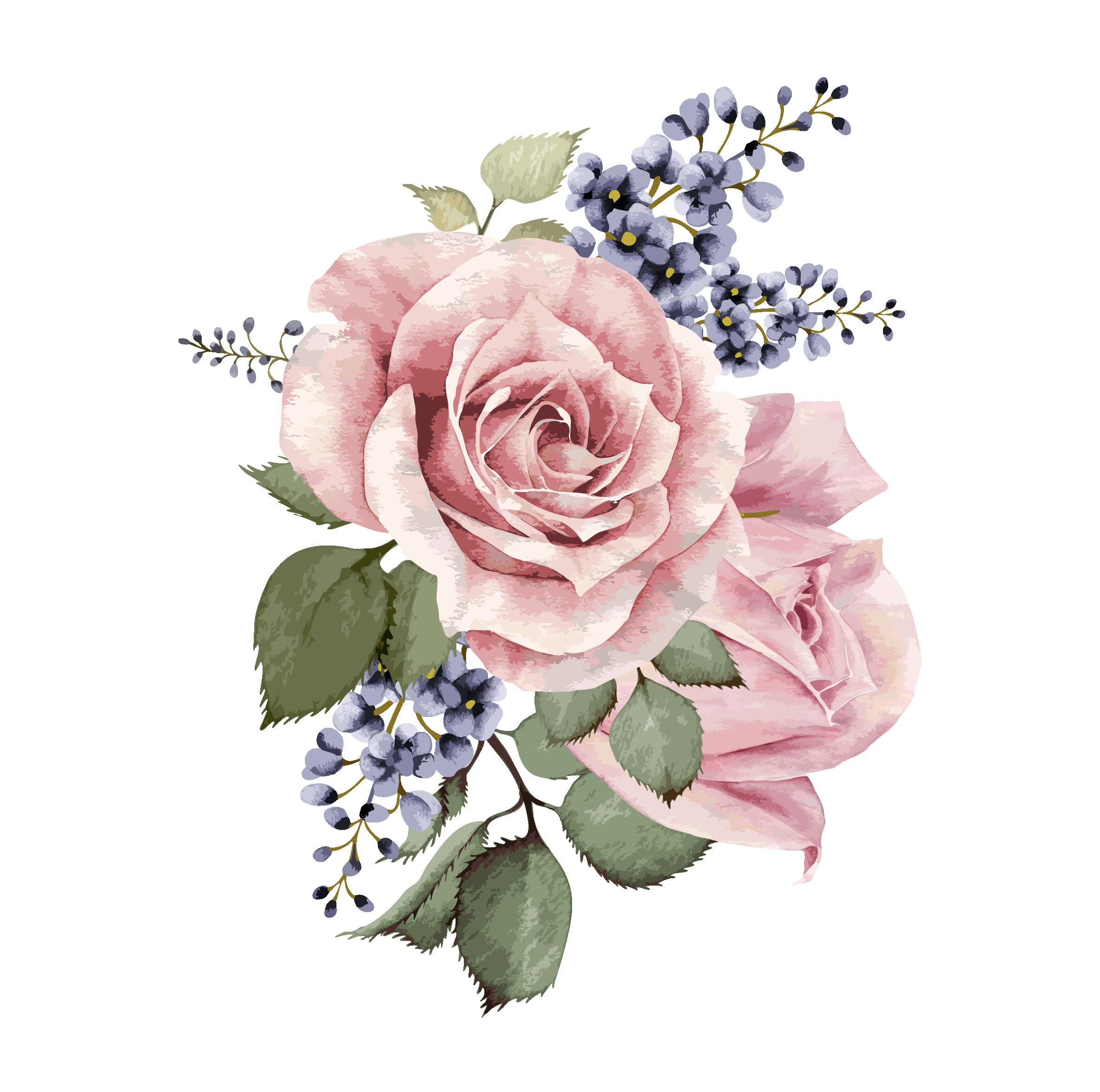 Image result for centifolia rose Flower painting, Flower