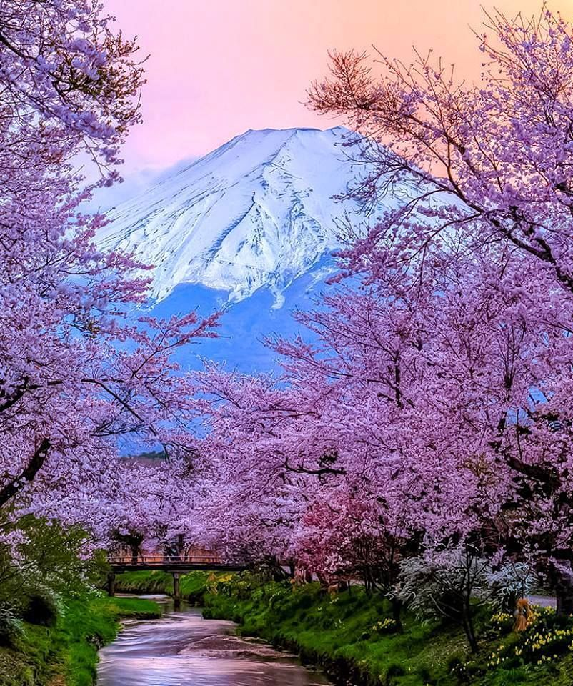 Mount Fuji, Japan. So Stoked To Actually Live Right Next