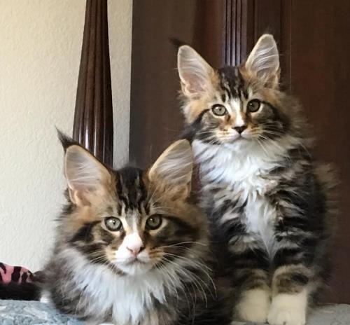 Pin On Feline Friends