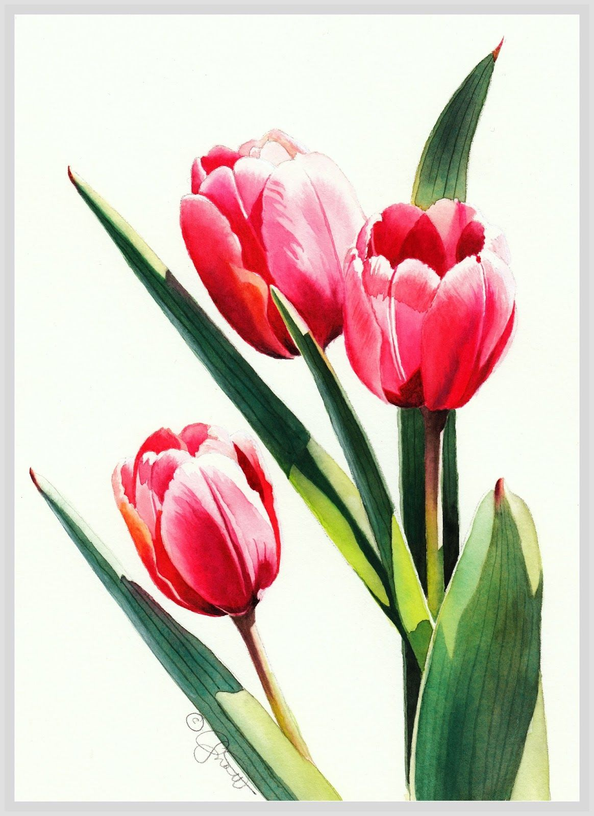 Three Tulips With Images Tulips Art Watercolor Tulips Tulip