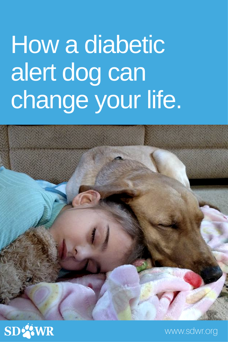 10 Reasons A Diabetes Alert Dog Can Change Your Life
