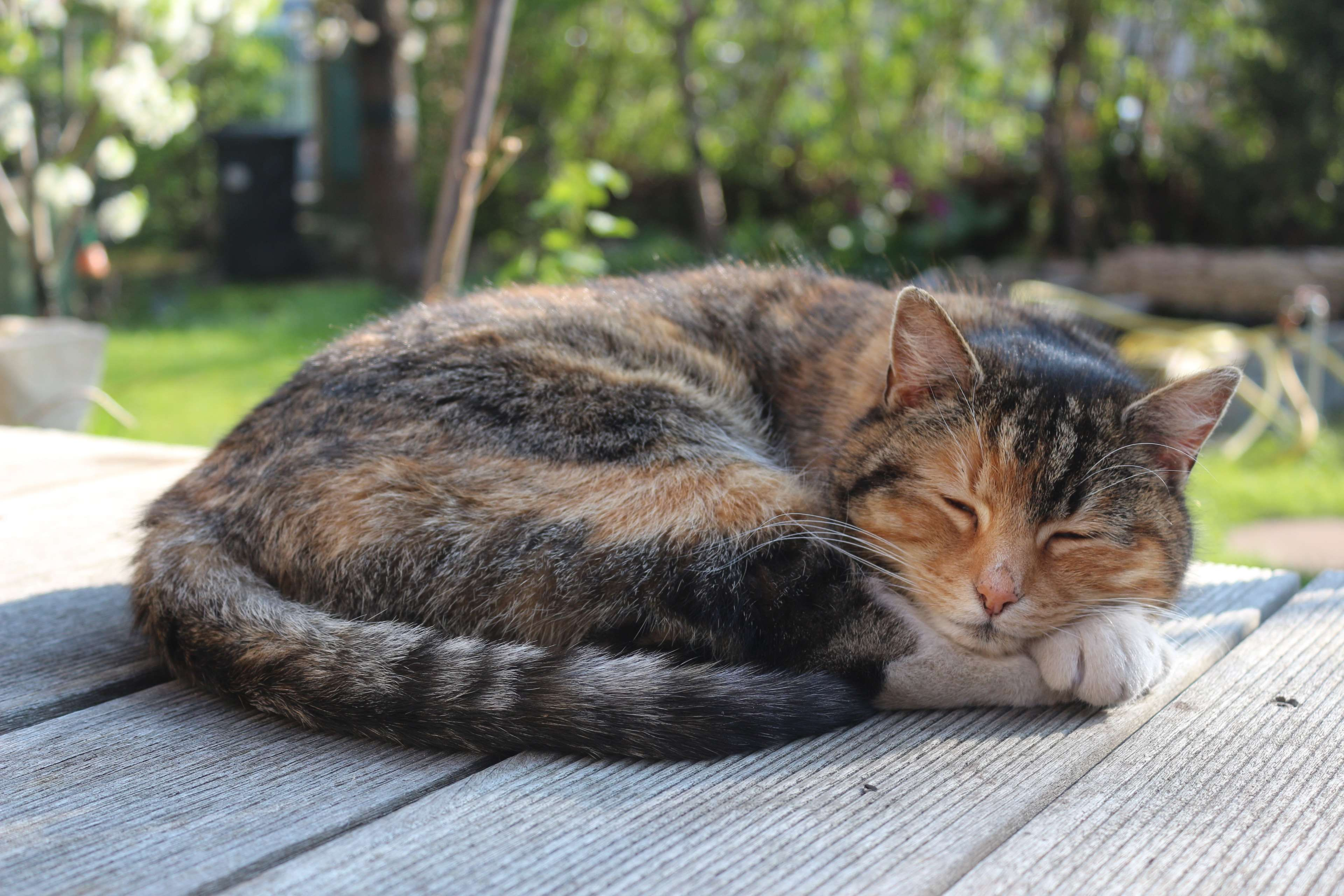 animal, cat, nature, pet, sleep 4k wallpaper