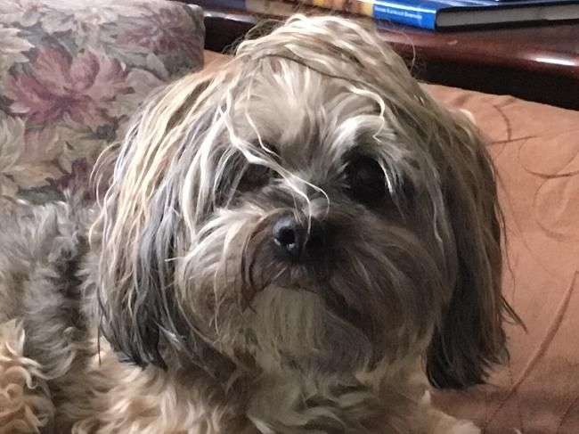 House Sitters Needed Dec 2 2017 Short Term Victoria British Columbia Canada Obedience School For Dogs Small Dog House House Sitter