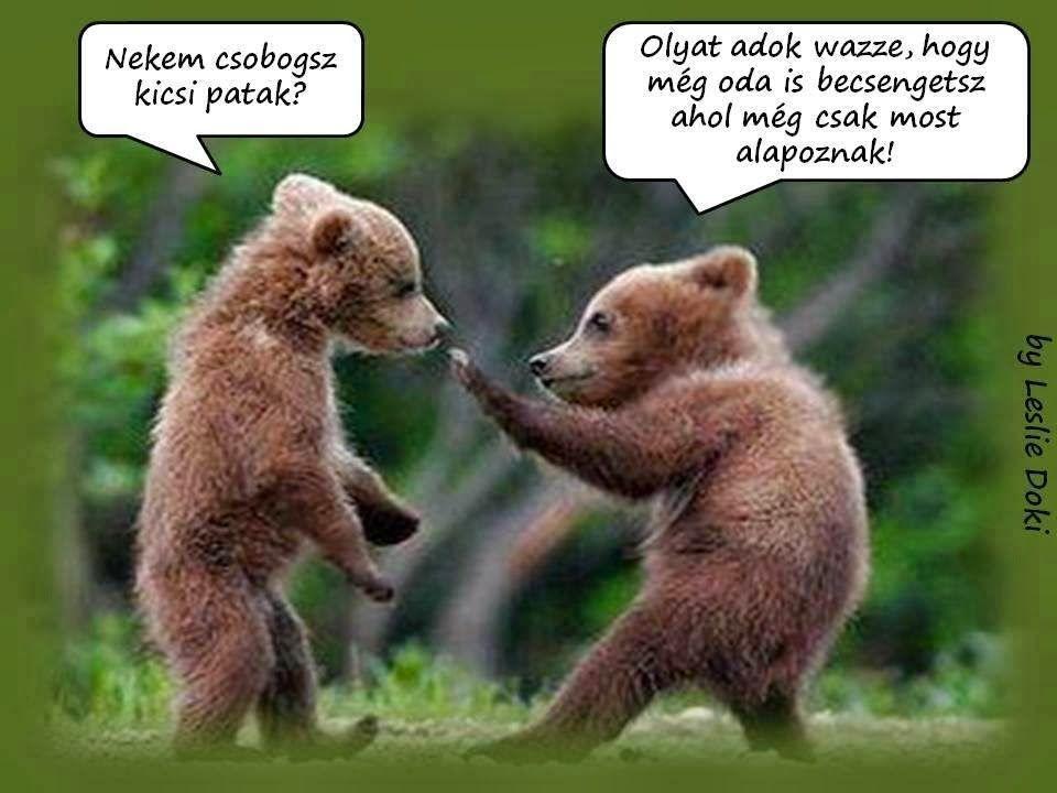 vicces képes idézetek képes idézetek vicces   Google keresés | Cute baby animals, Bear
