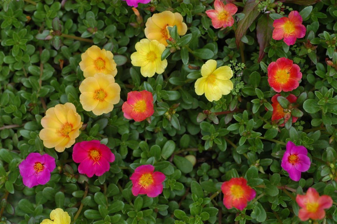 Onze horas flor amor de un rato pinterest flor y amor - Cuidar hortensias exterior ...