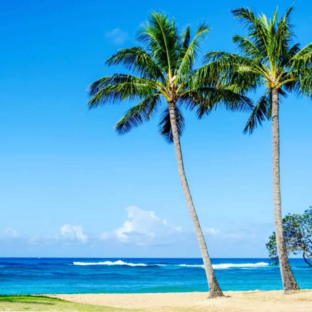 In love with Maui 😍 #piyogapants | Hawaii beaches ...