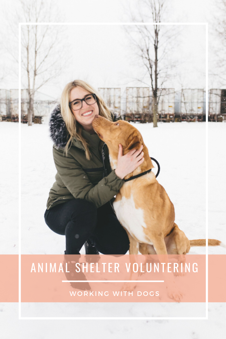 What It S Really Like Volunteering At An Open Access Shelter Animal Shelter Shelter Animal Rescue