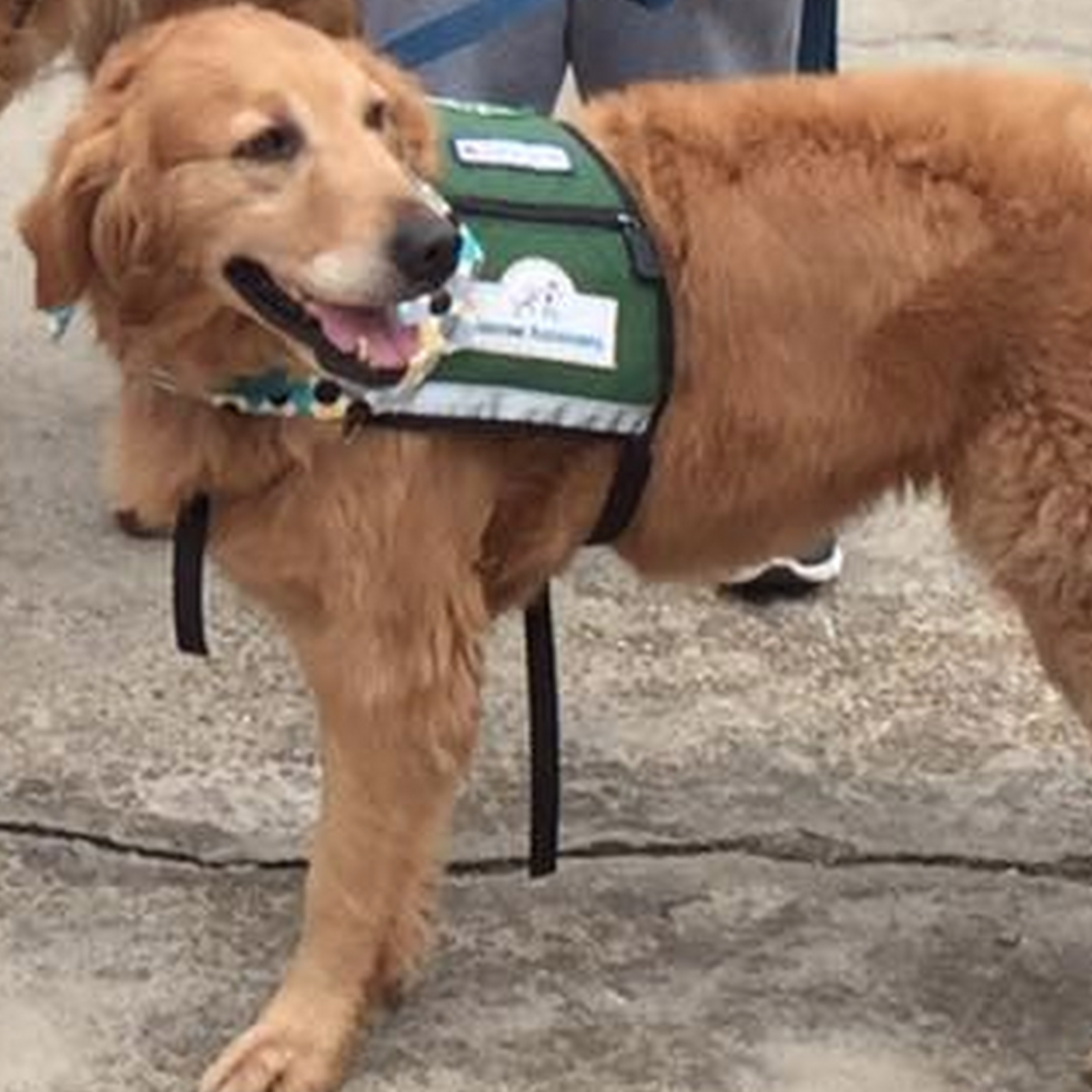 Supreme Court Takes Up Case Of Girl S Service Dog Service Dogs Dogs Supreme Court