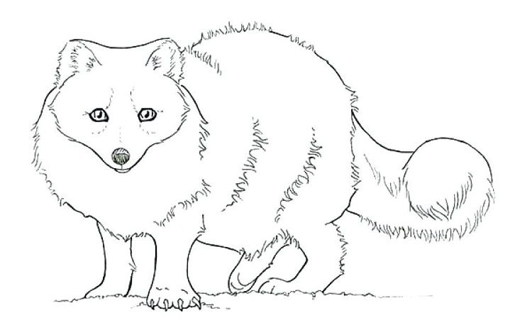 arctic fox coloring pages Pin by cherlyn on Coloring Pages Ideas arctic fox coloring pages