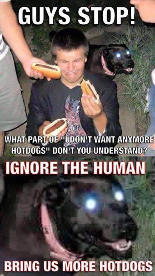 Ignore The Human Bring Us More Hot Dogs Funny Pictures Funny Memes Funny Dog Memes
