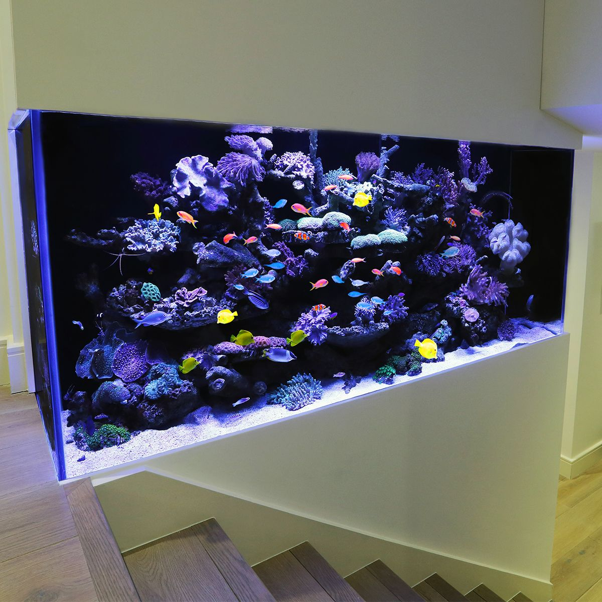 Aquarium Architecture (With