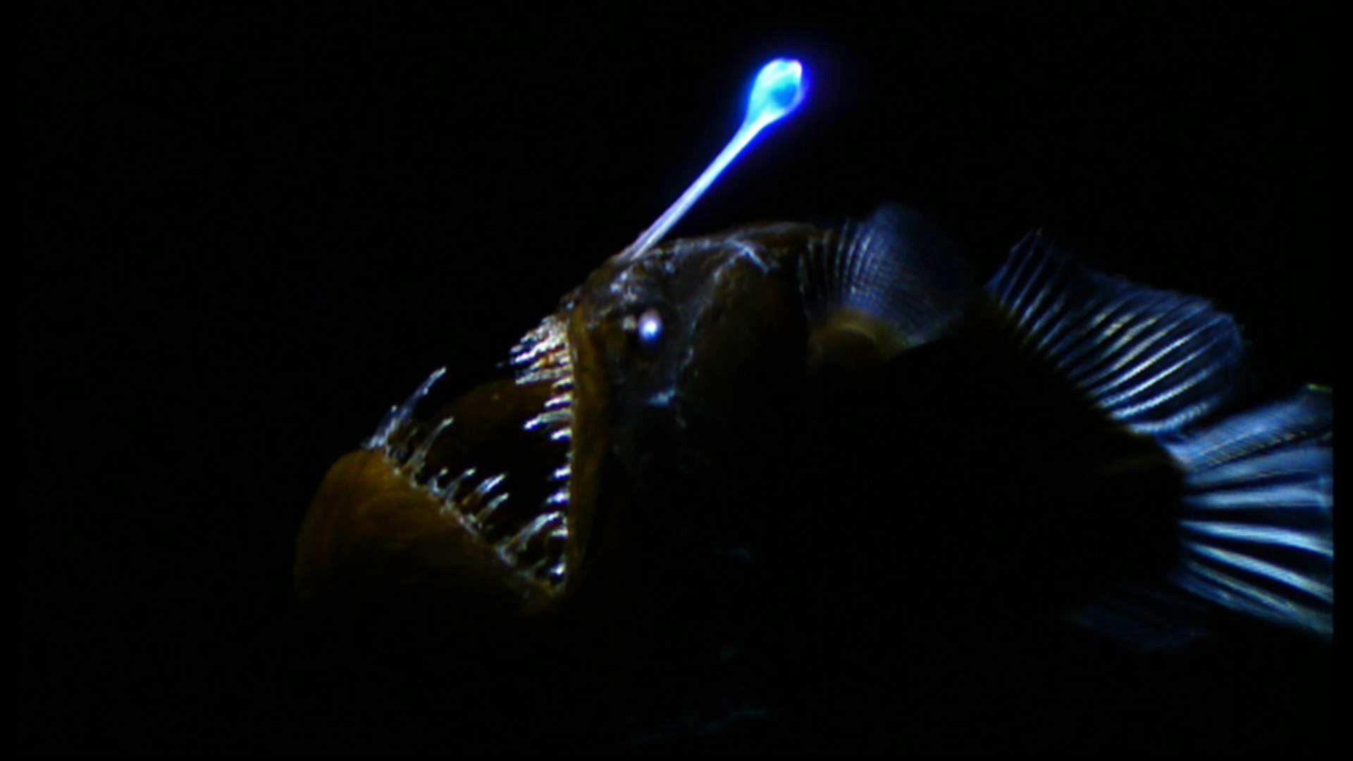 angler-fish.jpg (1920×1080) | deep sea circus | Pinterest | Animal for Anglerfish Light  157uhy