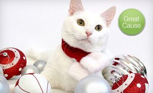 Groupon - $10 Donation to Help Shelter 40 Homeless Animals in Online Deal. Groupon deal price: $10.0.00