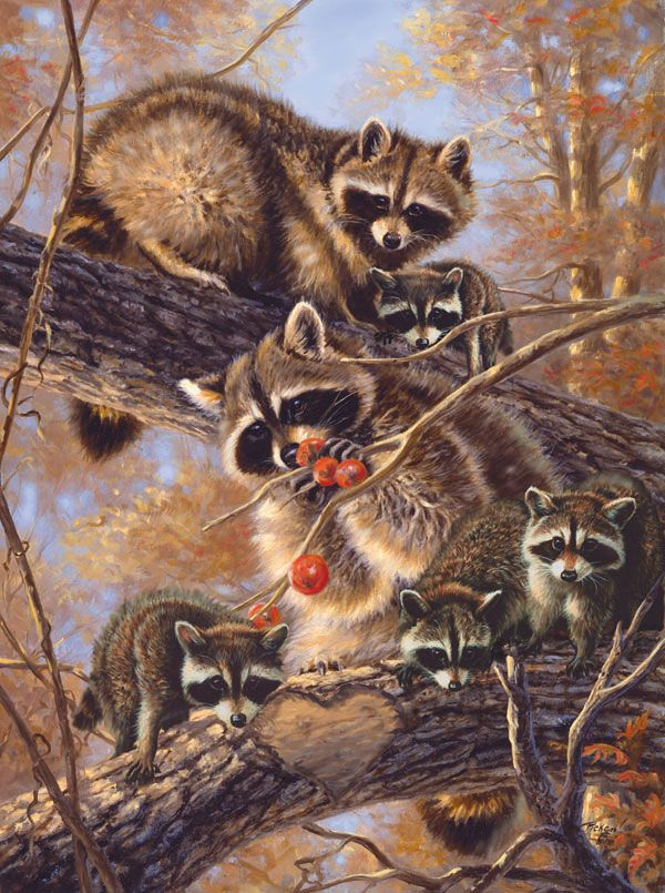 The Last Persimmons   Puzzles   Animal drawings, Raccoon art