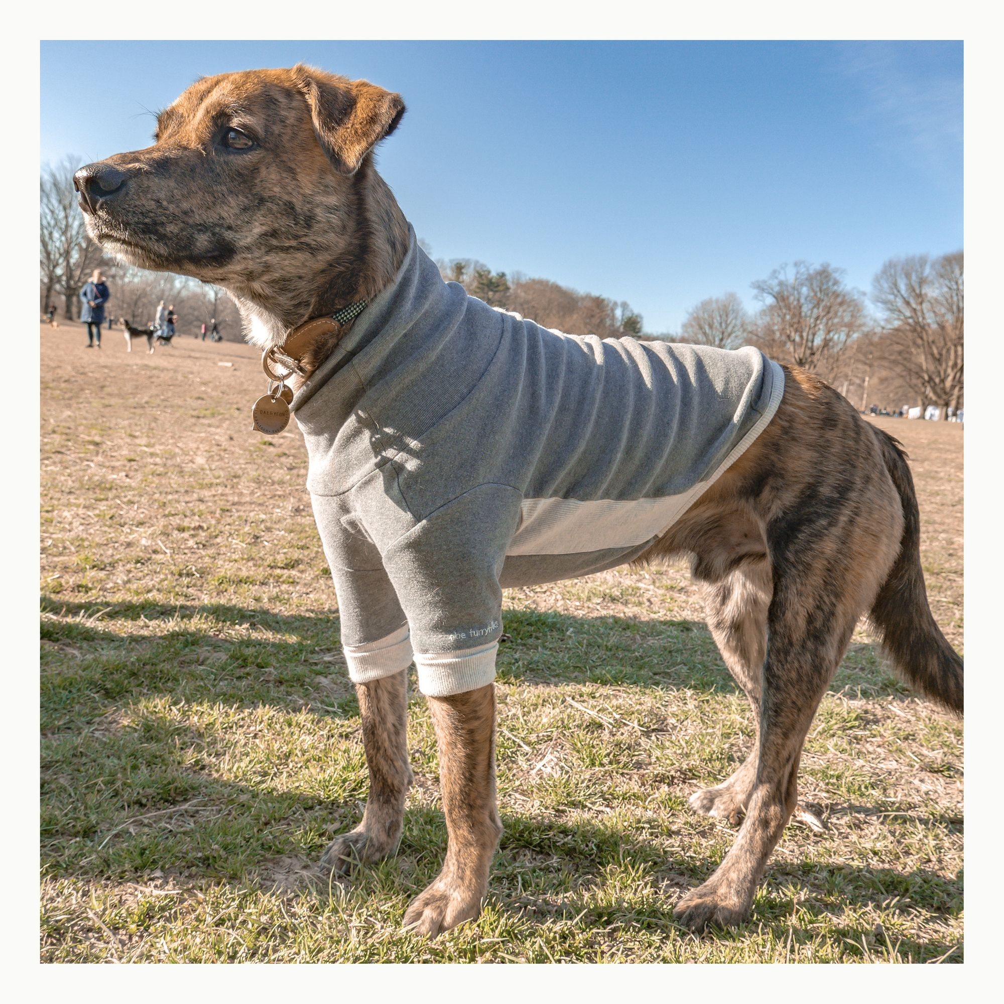 Best Seller Throughout The Year The Furryfolks High Neck Dog Tee Super Soft And Stretch With Meticulous Details For Th In 2020 Dogs Tee Animal Companions Dogs