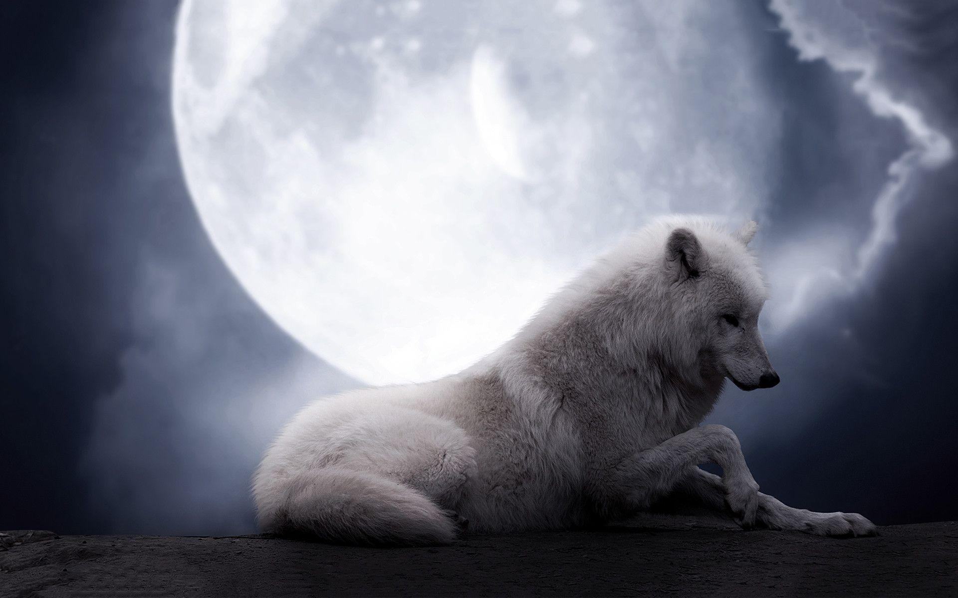 White Wolf Hd Desktop Wallpaper Widescreen High Definition Wolf