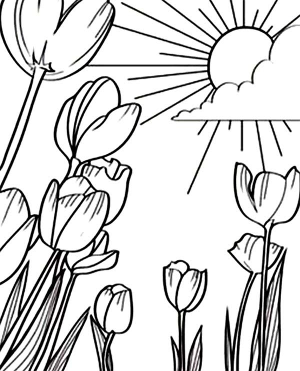 A Beautiful Sunshine In Tulips Field Coloring Page Coloring Pages Butterfly Coloring Page Coloring Book Pages