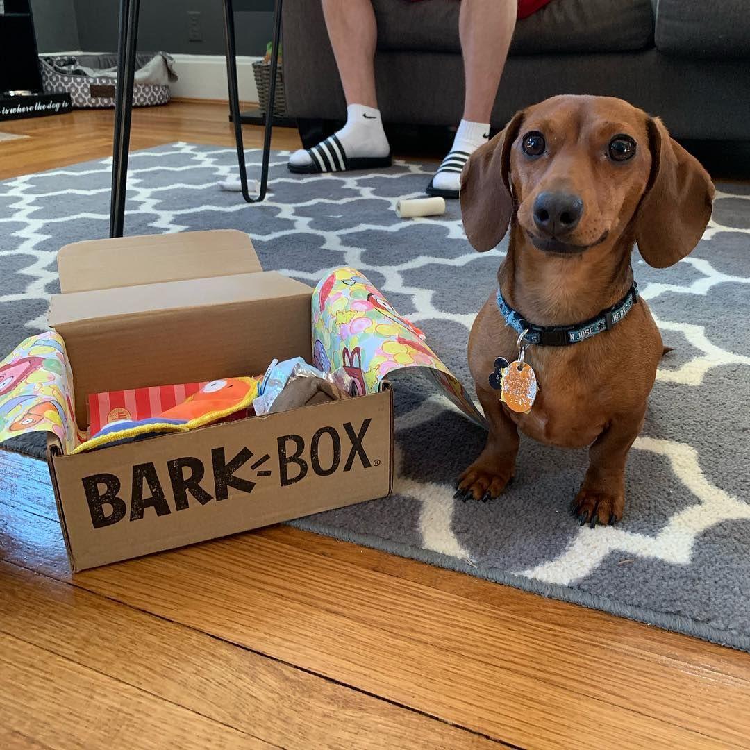 Barkbox For Dachshund Dogs Barkbox Lover Dachshund Dogs Barkbox