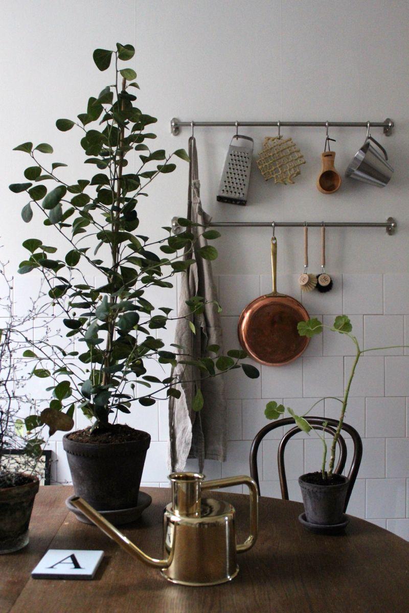 Pin di Spiderplant su Watering Cans | Pinterest | Mamma mia, Cucine ...