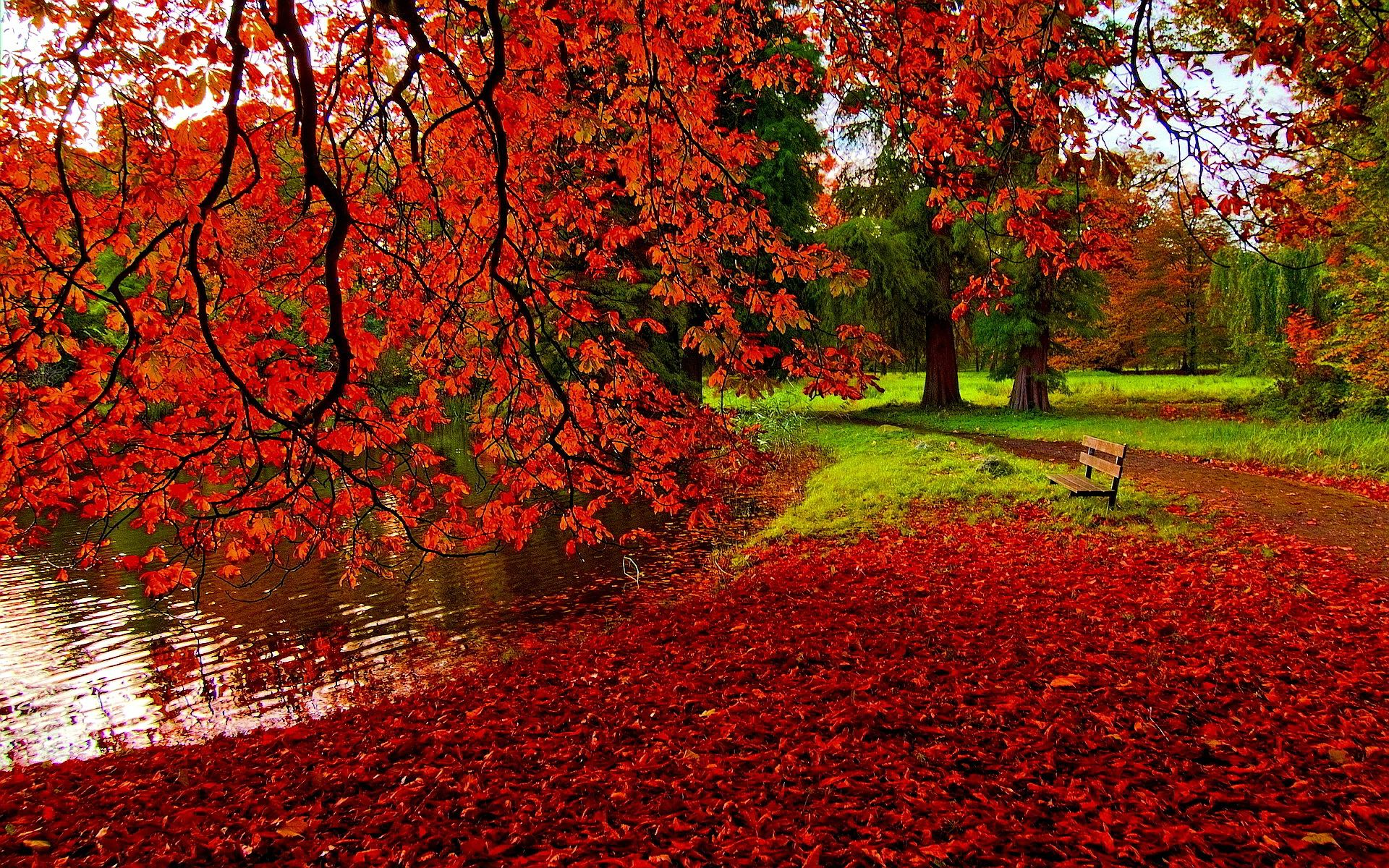Backgrounds of Autumn Nature HD