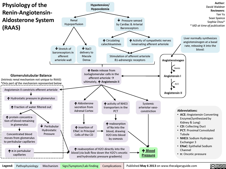 renin angiotensin aldosterone system pdf