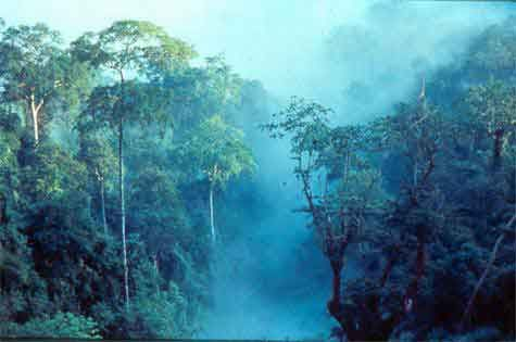 Image result for Kaeng Krachan National Park