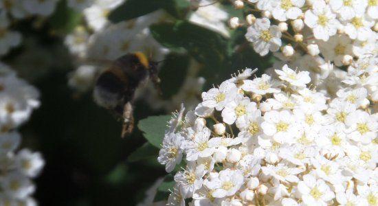Hecken Für Vögel Und Bienen