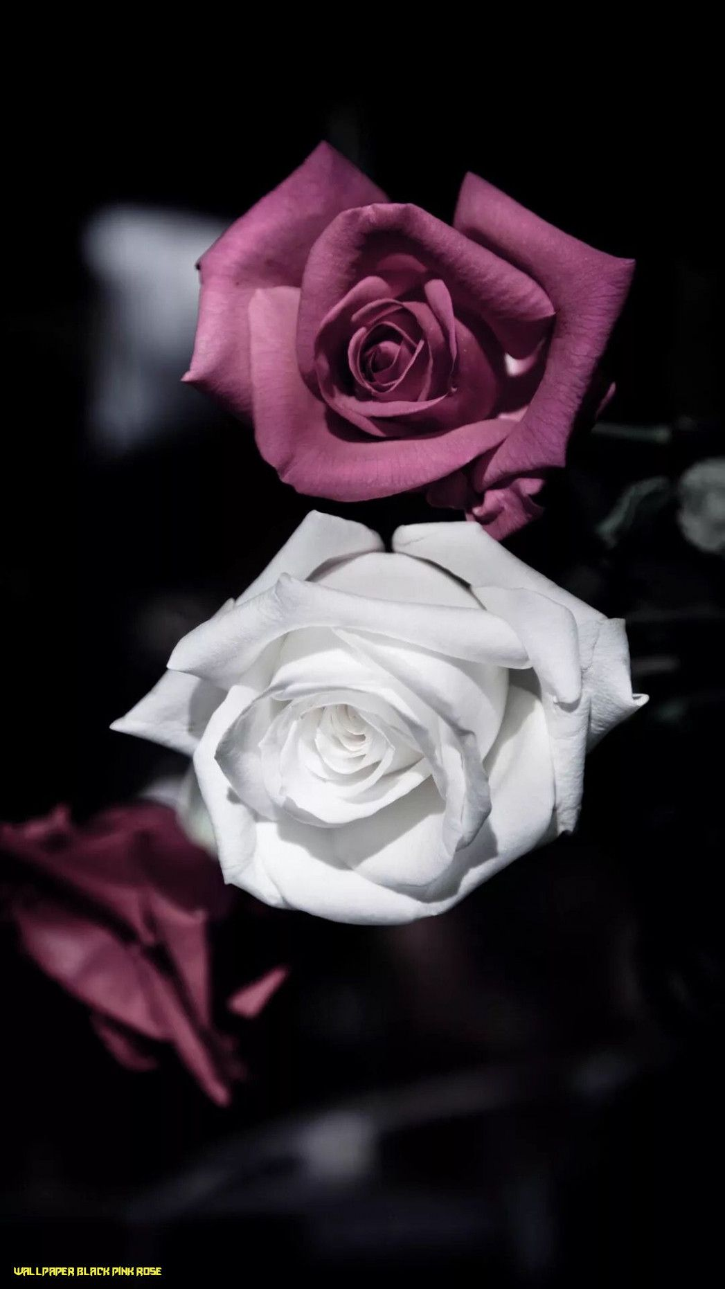 The 13 Secrets You Will Never Know About Wallpaper Black Pink Rose Wallpaper Black Pink Rose Floral Iphone Dark Flowers Rose Wallpaper