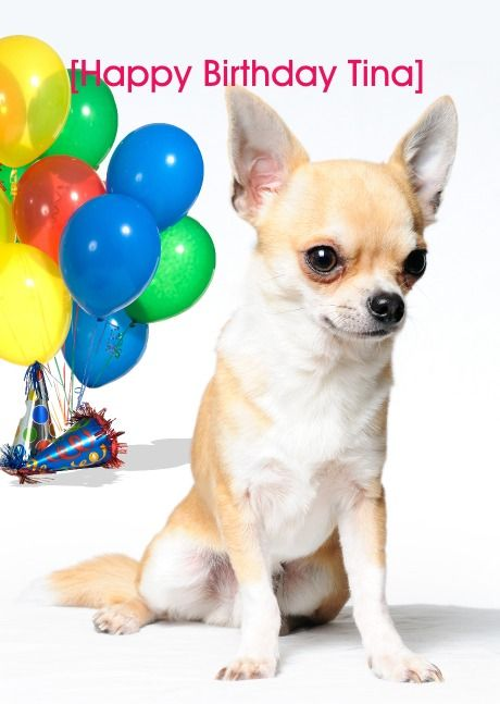 Helloturtle Birthday Cards Chihuahua1 Personalised Card