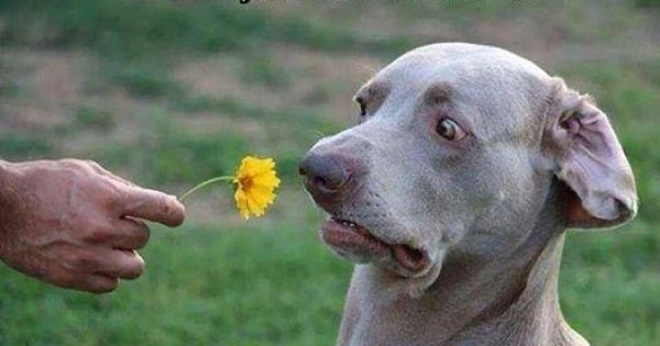 Image result for dog sniffing flower photos pinterest