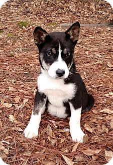 Walton County Ga Border Collie Mix Meet Martin A Puppy For Adoption Pets Puppy Adoption Kitten Adoption