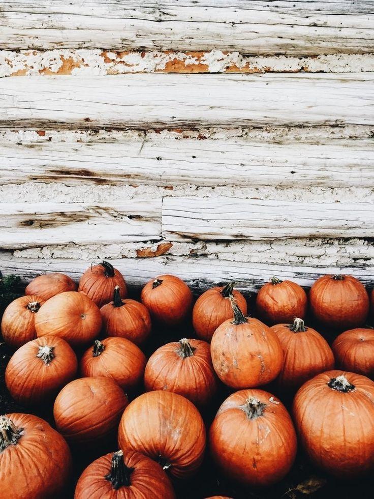Kurbisliebe Pumpkinpatch Kurbisliebe Halloweenaesthetic Kurbisliebe Pumpki Halloweenaesthetic Kurbislie In 2020 Fall Pictures Cute Fall Wallpaper Fall Wallpaper