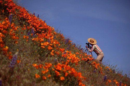 """트위터의 취향사진저장 님: """"너를 만나기 전까지는 세상에서 꽃이 제일 예쁜줄 알았지. 그렇지만 네가 꽃밭에 들어가 나를 보고 웃을 때 깨달았다. 아, 꽃보다 예쁜 것이 존재하는구나. https://t.co/GcUM0YGBP9"""""""