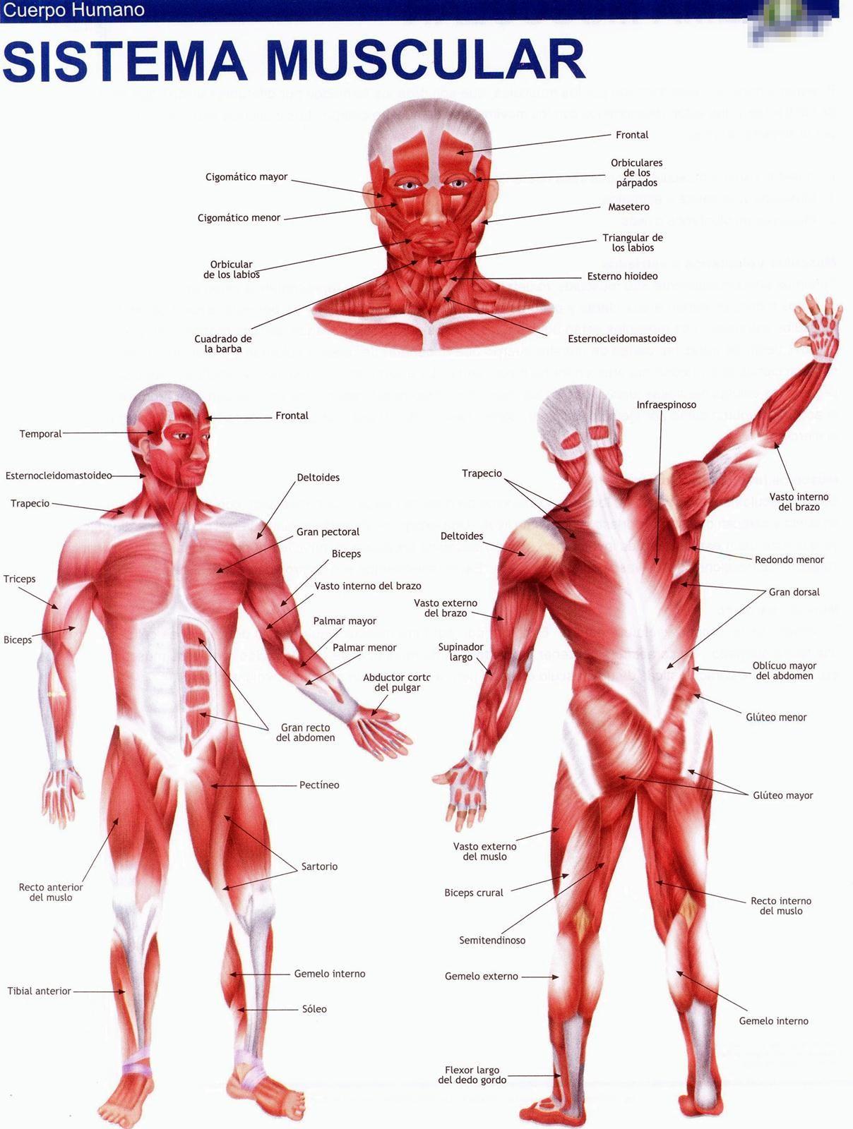 45 Imagenes A Todo Color Para Recortes Em 2020 Livro De Anatomia