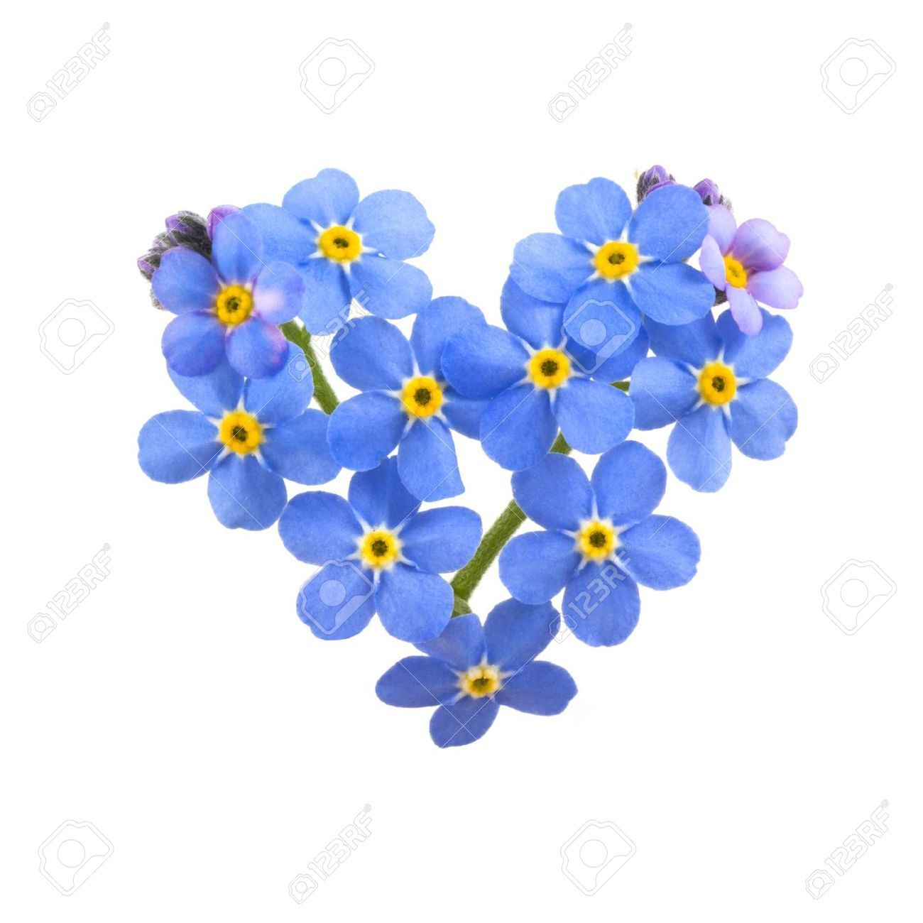 Images For Forget Me Not Flower Clip Art Black And White