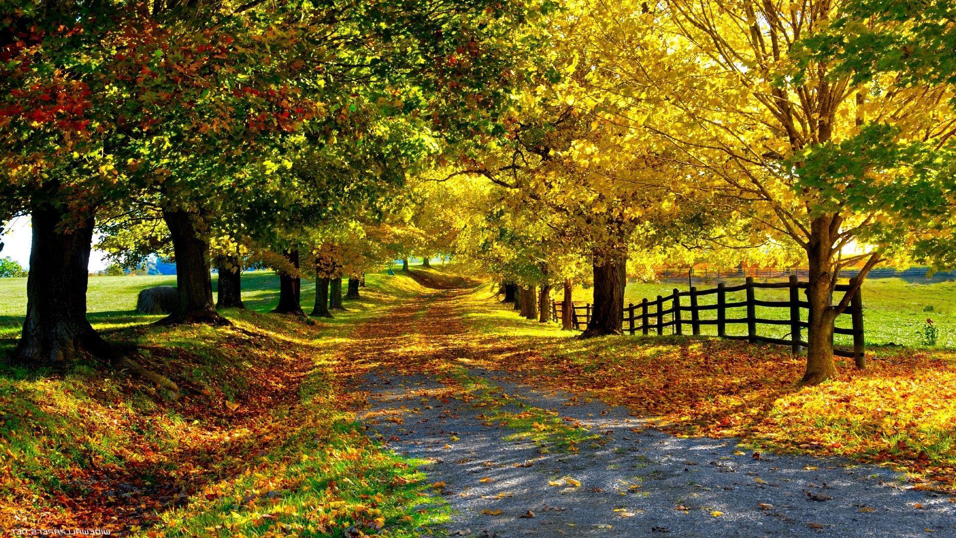 Sfondo natura in autunno sfondi hd gratis p l for Immagini autunno hd