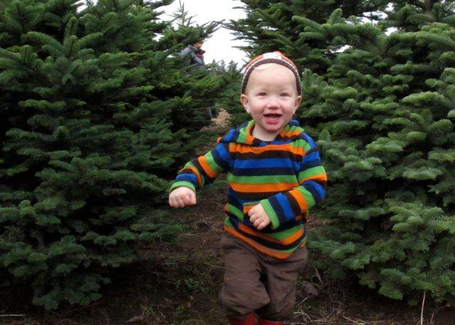 8 Great Christmas Tree Farms Near Atlanta Christmas Tree Farm Tree Farms Tree