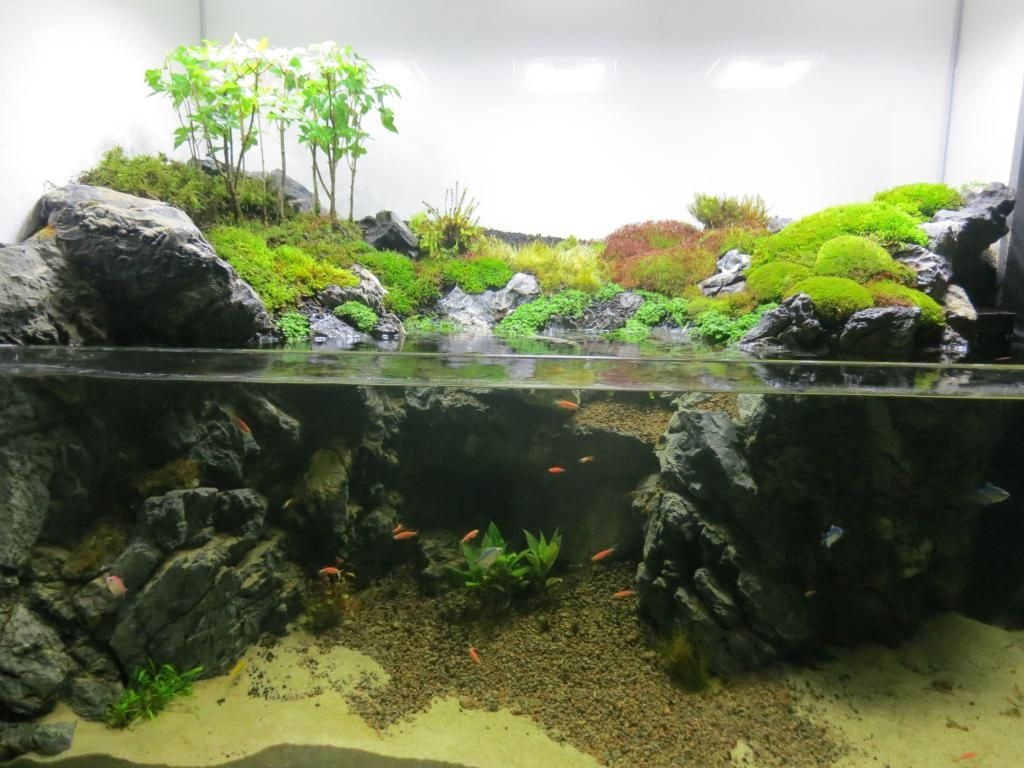 Fish aquarium price in pakistan - Roughly Half As Much Water But Still Enough For Fish Land Higher In The Back A Stream Running From The Top Right Left To The Middle And Then Cascading