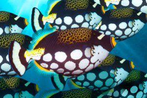Jak Wyglada Podwodne Zycie Na Rafie Koralowej Pobierz Niesamowite