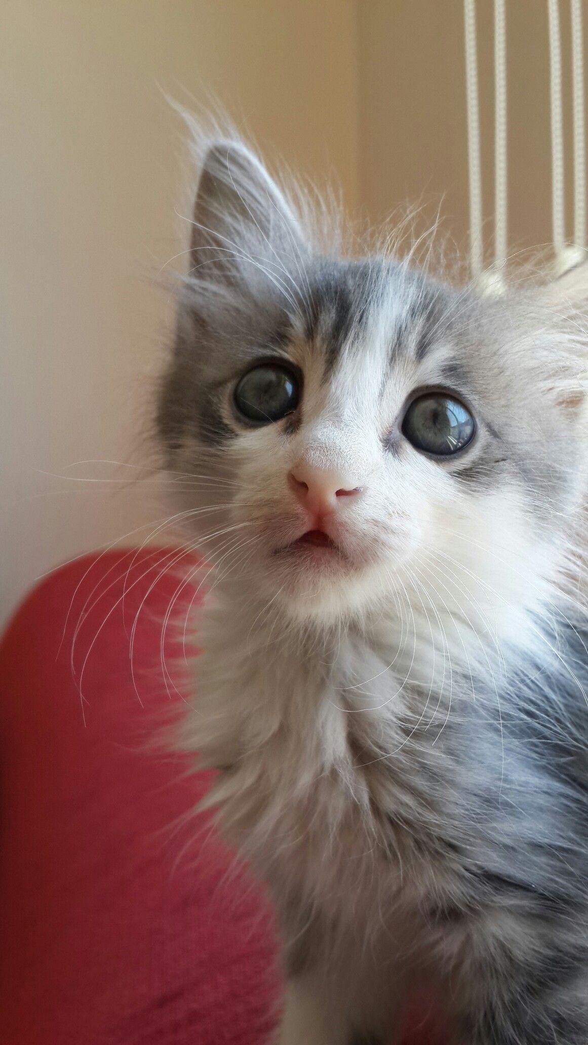 Milo My Love Cute Cats Beautiful Cats Crazy Cats