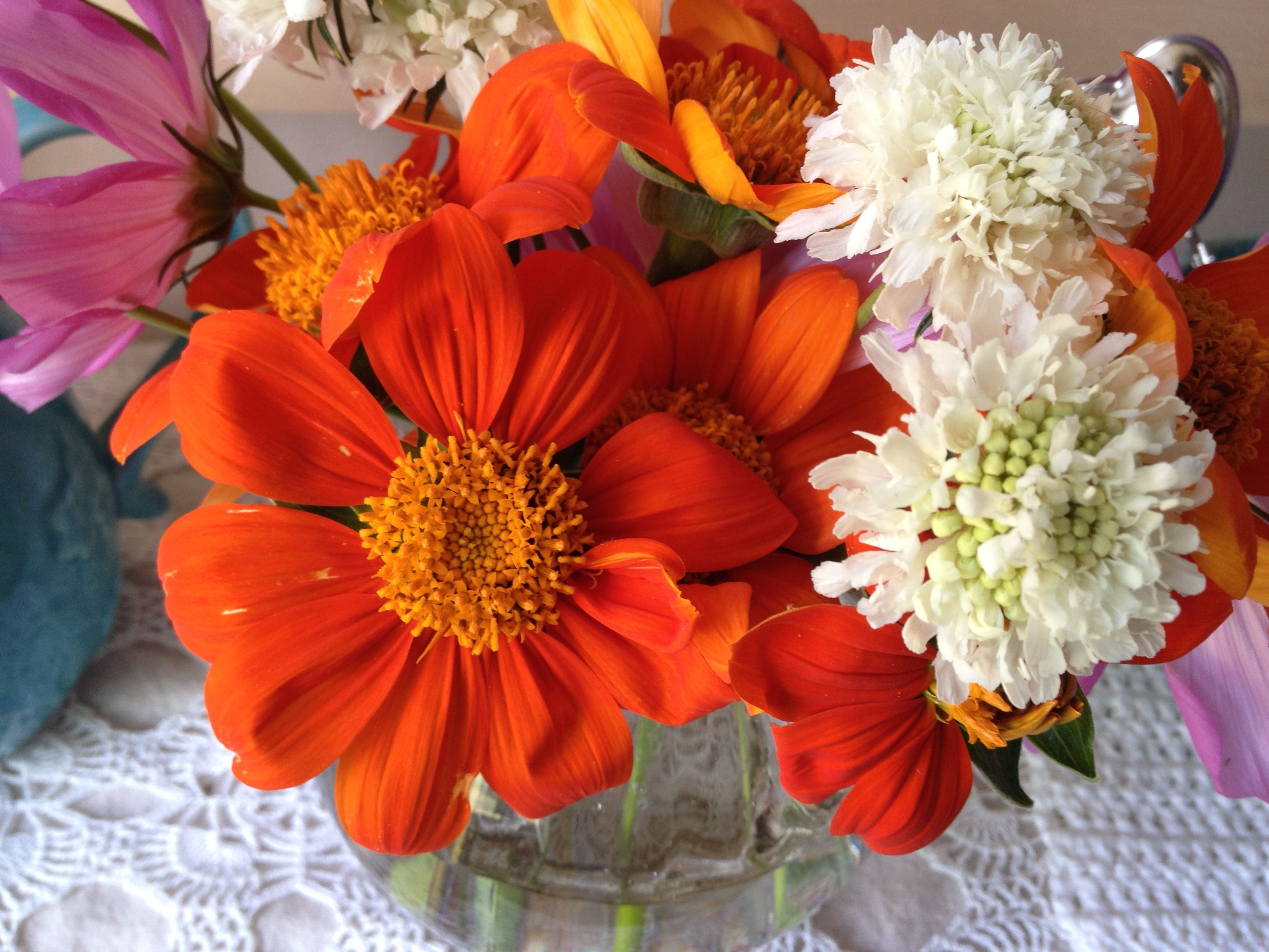 From My Garden A Small Bouquet Of Orang Mexican Sunflowers White