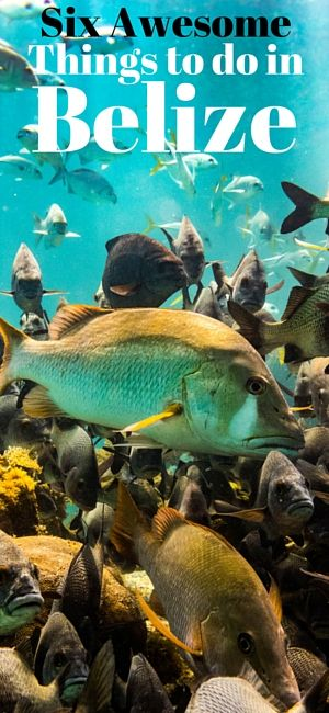 6 of the Most Awesome Things to do in Belize