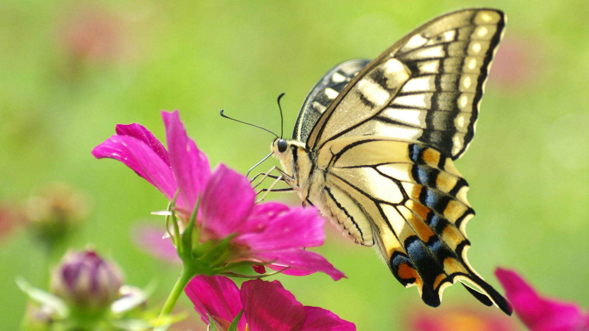 Incroyable Butterfly Rests On Flower Macro Shot Hd Wallpaper List .