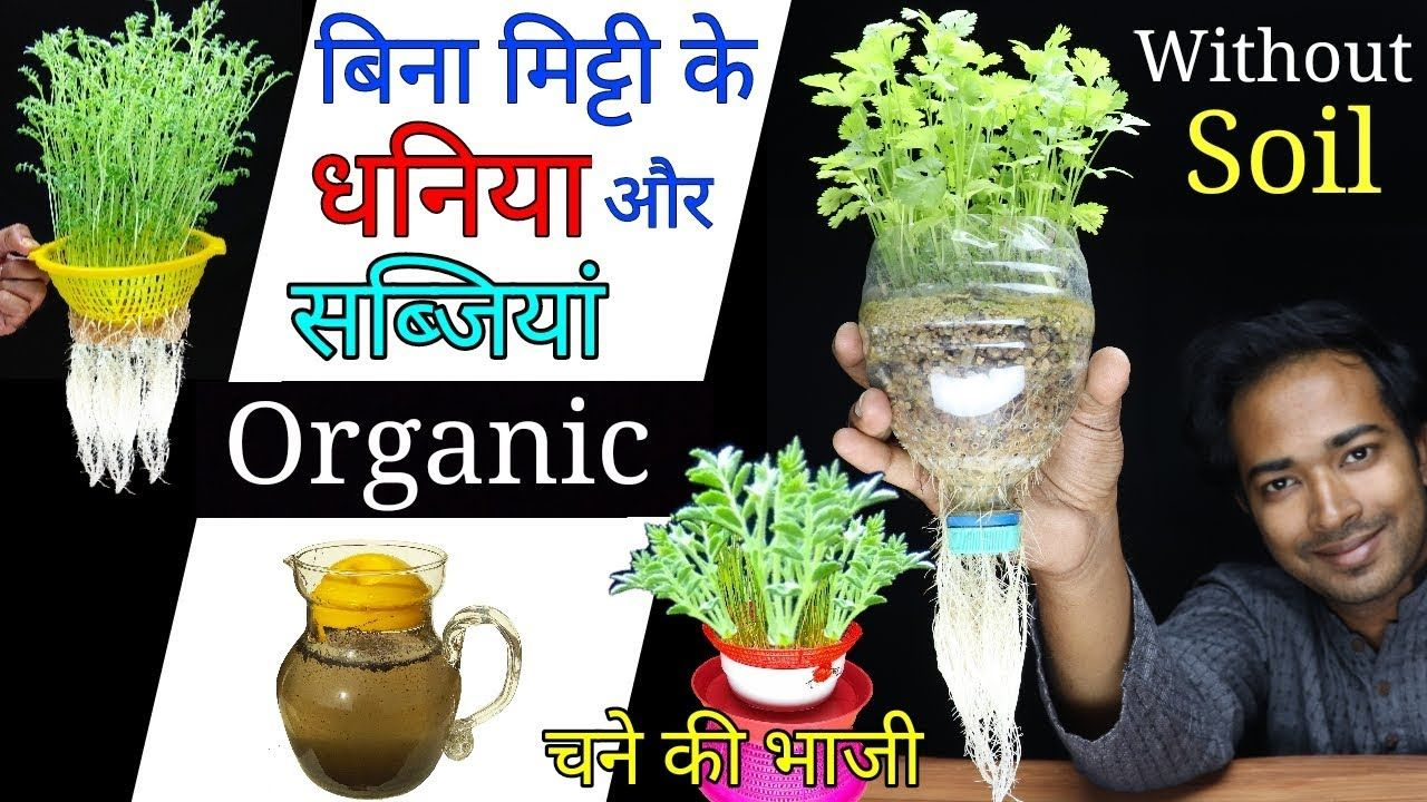 How to grow coriander or vegetables at home without soil