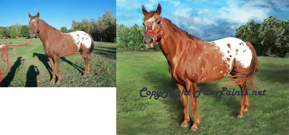 Appaloosa Horse painting from photograph using the new rapidly growing fine art giclee canvas technique making it affordable for all.  http://www.pawpaints.net